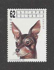 Dog Art Head Portrait Postage Stamp TOY MANCHESTER TERRIER Bulgaria 1991 MNH