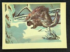 1956 Gum Inc Adventure #2 The Porcupine Attack Proof? (A)