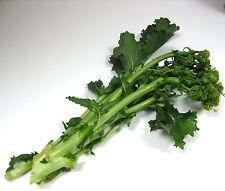 150 graines de CIMA DI RAPA (Brassica Rapa Rapa) RAPINI H806 BROCCOLI RAAB SEEDS