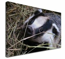 More details for badger in straw x-large 30
