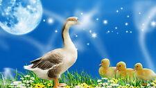 Goose With Goslings Men Sweatshirt S M L XL 2XL 3XL