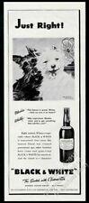 1946 Scottie Westie cute blowing fan art Black & White Scotch Whisky print ad