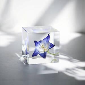 Handmade Flower Specimen Epoxy Resin Plant Girlfriend Christmas Gift Furnishings