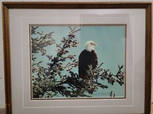 "Thomas Mangelsen "" Eagles Watch "" Limited  Numbered Signed Print Framed 528/950"