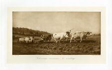 """""""Rosa BONHEUR : Le sombrage """" Heliogravure originale BRAUN CLEMENT & Cie 1890"""