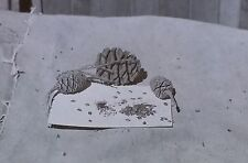 Cones/Seeds of Giant Sequoia, Magic Lantern Glass Slide (California)