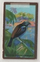 Orange Rumped Tanager Bird 1920s Ad Trade Card