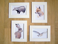 HARE FOX OWL BADGER 4 print set watercolour painting Sarah Featherstone Art