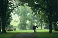 "Doug Prather, ""Kentucky Morning Turnout"", Horse, Print, Landscape, 24""X36"""