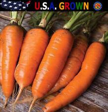 1000 Danvers 126 Half Long Carrot Seeds Daucus Carota Non-Gmo Heirloom Gardening