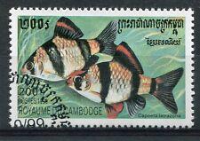 CAMBODGE - 1999, timbre 1667, POISSONS, CAPOETA TETRAZONA, oblitéré