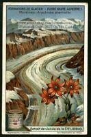 Alpine  Flowers: Sempervivum Arachnoideum 1920s Trade Ad Card