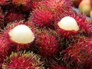 Rambutan Nephelium Lappaceum  live Tree Plant Grafted Tropical Fruit