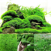 Natural Aquarium Moss Live Aquatic Plants Fish Tank Aquascaping Landscape Decor