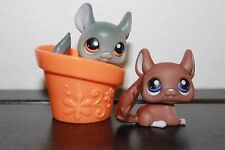 Littlest Pet Shop White Grey Gray Green Eyes Chinchilla #144 #314 LOT BROWN HAT