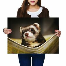 A2 - Ferret Hammock Pet Rodent Animal Poster 59.4X42cm280gsm #16329