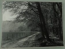 PHOTO D'ART DE 1959 . ARBRE. SOUS BOIS DE G.TEISENTZ .29x39 cm. SNAPSHOT VINTAGE