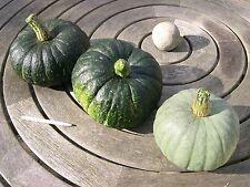 'Pumpkin - Jap (cucurbita maxima) 10 Reliable Viable Seeds