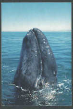 Ca 1975 PPC Baby Gray Whale Nursery At Pacific Coast Hoping To Save Them Mint