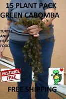 15 cabomba live plants planted tank aquarium. Buy2Get1Free + Free mystery plant