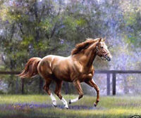ZOPT95 hand painted impetuous horse landscape ART OIL PAINTING ON CANVAS