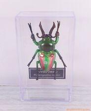 Phalacrognathus muelleri  Rainbow Stag Beetle PVC Replica Model Figure