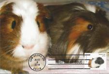 Guinea Pig Rodent Pet Fdc Usa mammal Maximum Card Scott # 5114