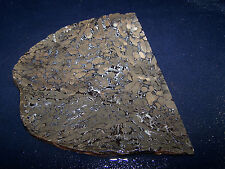 "Teredo Wormwood- Fossil)   slab-- 5 1/2  x   4 3/4""-  rough- cabbing-display"