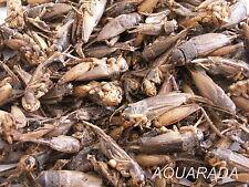 2 Liter Grillen Grashüpfer Heuschrecken Futterinsekten Reptilien Fischfutter