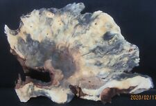Buckeye burl slab excellent figure & color #Ty1120 25 x 17 x 2