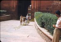 Woman Donkey Boy Calcutta India 1950s 35mm Slide Red Border Kodachrome