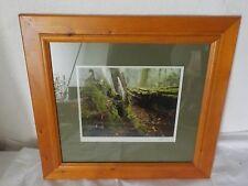 Aus einer Villenauflösung:Fotographie eines Waldes -signiert