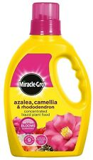 UK Seller: Miracle-Gro Azalea, Camellia And Rhododendron Liquid Plant Food 1 L