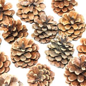 1kg PACK OF AUSTRIACA PINE TREE CONES - CHRISTMAS FESTIVE DECORATION - APPROX 50