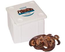Kanadische Tauwürmer Angelköder 72 Stück in der Styrobox, Tauwurm, Angelwürmer