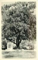 Butte County Eastman Mother Orange Tree 1943 Oroville California RPPC 7799
