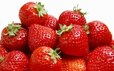 Strawberry Fragrance Oil Soap Making Wax Melts Candles Bath Bombs