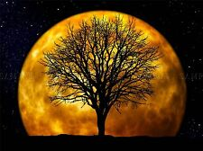 SPACE MOCK MOON SILHOUETTE TREE NIGHT STAR LARGE POSTER ART PRINT BB3253A