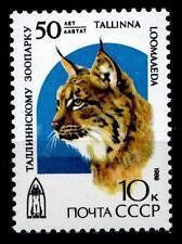 Luchs aus Tierpark in Tallinn. 1W. UdSSR 1989