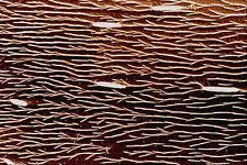645079 Carpenter Ant Back A4 Photo Texture Print