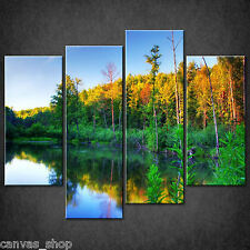 THE BEAVER POUND FOREST SUN WALL ART CASCADE CANVAS PRINT PICTURE READY TO HANG