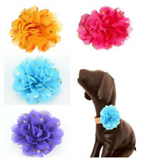 4Pcs/Pack Gold Dot Charm Flowers For Dog Pet Puppy Collar Decoration Accessories