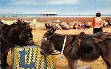 Learner Donkeys on the Sands, Constance, Littlehampton, Sussex