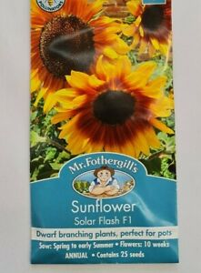 Outdoor Garden Patio Annual Flower Flowering Sunflower Solar Flash F1 25 Seeds