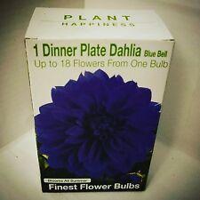 1 Dinner Plate Dahlia Bulb - Blue Bell - Netherland Bulb Company - NIP