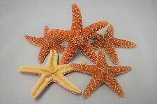 """Sugar StarFish Sea Shell Wedding Real Craft 4"""" - 5"""" (5 pcs)"""
