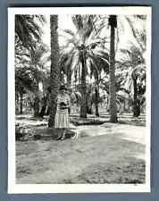 Algérie, Biskra (بسكرة), sous les palmiers  Vintage silver print Tirage argent