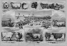 NEW ENGLAND AGRICULTURE FAIR AT NARRAGANSET PARK, PROVIDENCE, RHODE ISLAND, OXEN