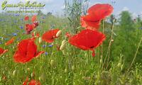 Blumenwiesenmatte Blumenwiese Blumensamen Matte HaGa® 2m x 25m