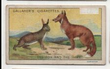The Fox And Hare Aesop's Fable Moral Story 1920s Ad Trade Card